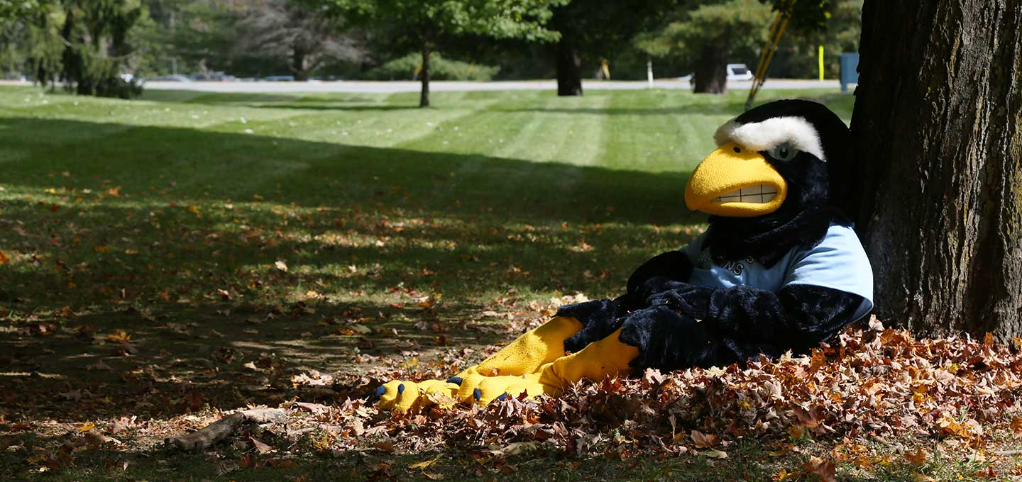 Falco in the leaves image